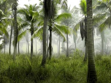 palm trees, jungle, tropical, green, grass, nature