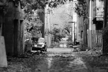 alley, street, fences, apartments, railings, balconies, lamp posts, lights, leaves, trees, cars, parking, black and white