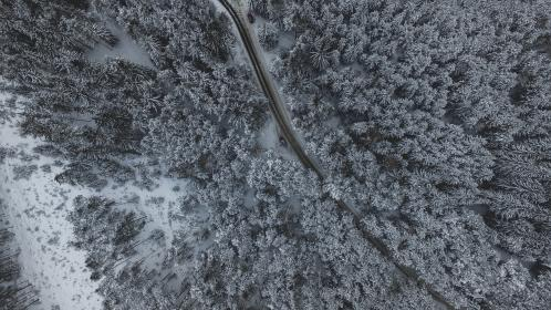 snow, winter, white, cold, weather, ice, trees, plants, nature, forest, woods, aerial, road