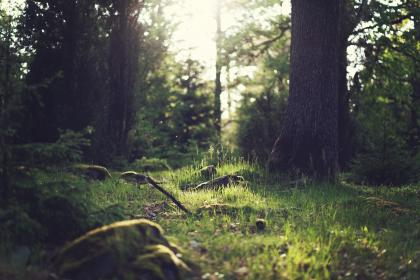 green, trees, grass, woods, nature, forest, outdoors, sunshine, branches, bushes, sticks