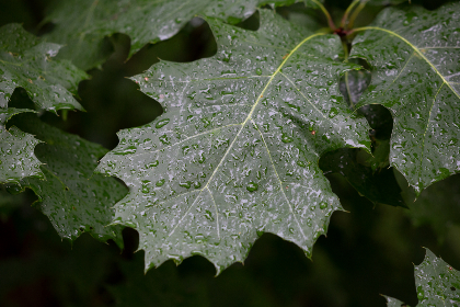 free photo of wet   leaves