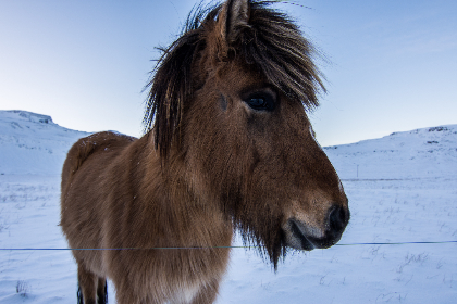 winter,  wild,  horse,  snow,  frozen,  cold,  landscape,  nature,  animals,  outside,  outdoors,  sky,  pasture