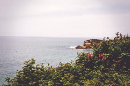 sky, grey, water, beach, rocks, green, red, flowers, sea, ocean