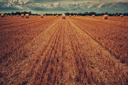 bale of hay,  farm,  crops,  round,  farmfield,  sky,  autumn,  row,  agriculture