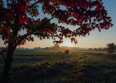 red, leaves, trees, nature, landscape, green, grass, sunset, rural, countryside, field, sky, autumn