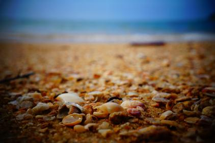 sea shells, shore, beach, sand, ocean