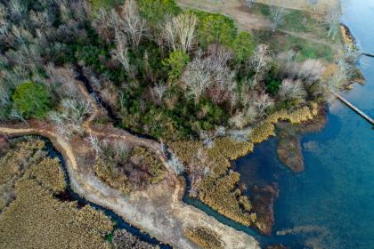 trees, plant, aerial, view, sea, water, nature, outdoor, landscape