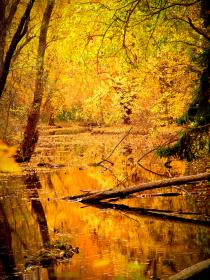 lake, water, trees, forest, woods, nature, branches, leaves, colors, yellow, autumn, outdoors