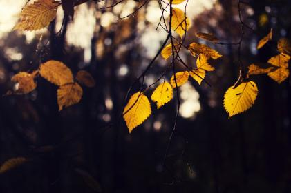 leaf, fall, autumn, trees, plant, forest, bokeh, blur, nature