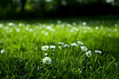 green, grass, grassland, field, lawn, outdoor, landscape, nature, beautiful, flowers