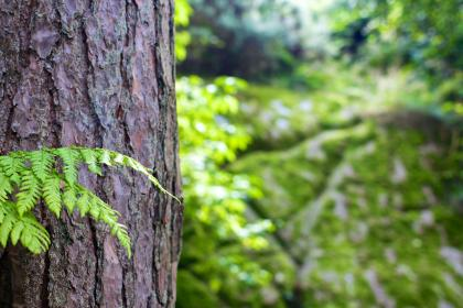 tree trunk, bark, leaves, nature, forest