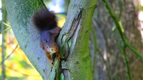 squirrel, animal, trees, nature, green, leaves