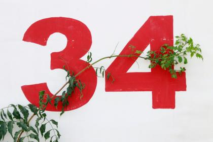white, wall, numbers, branch, leaves, plant