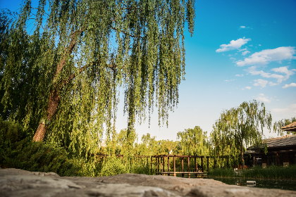 free photo of green  trees
