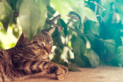 tree, plant, green, leaf, cat, hiding, pet, animal, outdoor