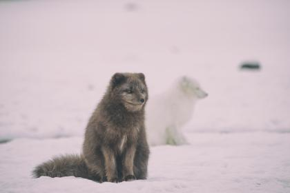 snow, winter, white, cold, weather, ice, animals, nature, fur, brown, white