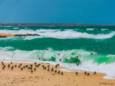 birds, beach, ocean, sea, water, sand, flock, fly