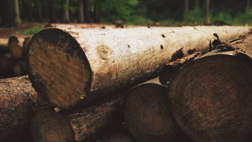 wood, logs, lumber, forest, woods, nature