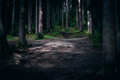 trees, wood, forest, green, grass, roots, plants, pathway