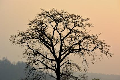 tree, branches, plant, nature, foggy, landscape, outdoor, sky, silhouette
