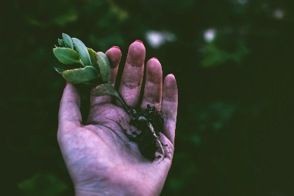 woman,  plant,  hand,  nature,  female,  girl,  roots,  dark,  small,  flower