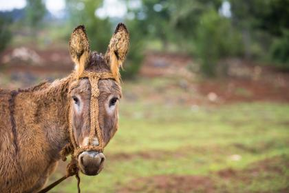 donkey, horse, animal, green, grass, blur, trees, plant, nature, forest