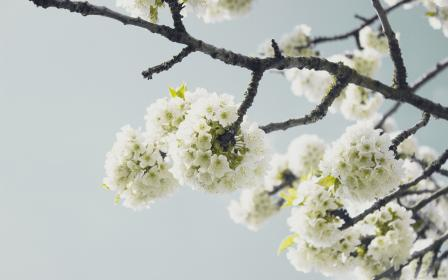 white, flower, bloom, blossoms, nature, plant, sky, branch