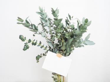 green, leaf, plants, interior, flower, glass, water, vase, message, white, envelop