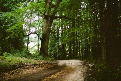 trees, branches, leaves, dirt, mud, trail, path, woods, forest, outdoors, nature, soil