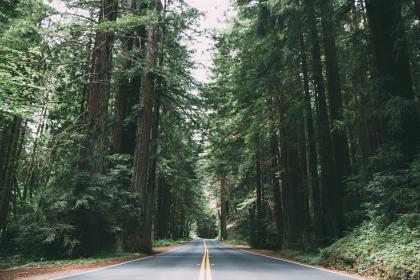 rural, road, countryside, trees, forest, woods, nature, outdoors