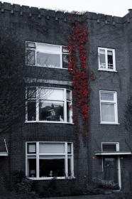 red, vines, bricks, windows, building, apartment