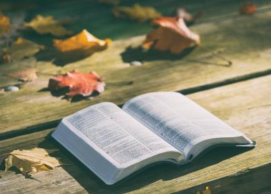 bible, book, reading, table, leaf, fall, autumn