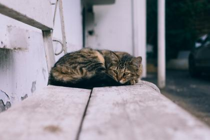 cat, animal, rest, steel, bench, outside, car, blur
