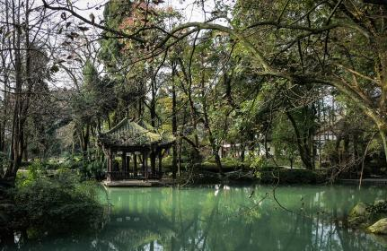 water, trees, branches, green, nature, Jade Pavilion, Dujiangyan, Sichuan, China