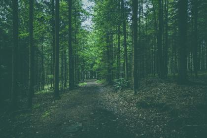 nature, forests, trees, roads, paths, fallen, leaves, trunks, branches, park