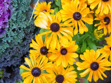 flowers, nature, blossoms, leaves, bed, field, stems, stalk, yellow, petals, outdoors, garden, patterns, colors