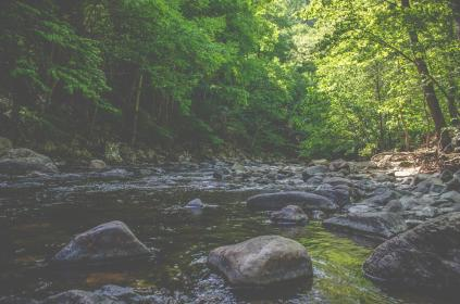 river, water, stream, rocks, nature, outdoors, trees, forest, woods, summer