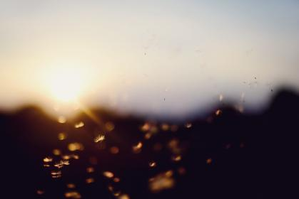 sunset, bokeh, dandelion, summer, direct light