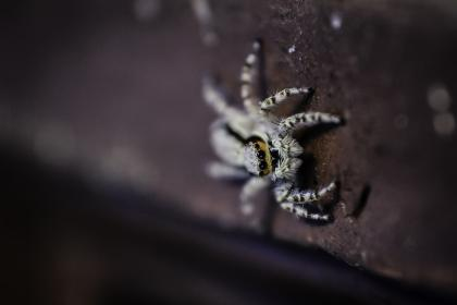 creepy, animal, insect, outdoor, spider, blur, spiderweb