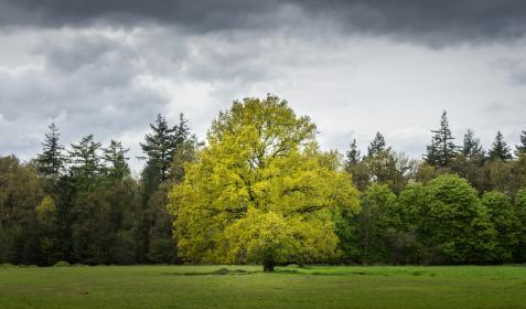 cloud, sky, tree, plant, nature, landscape, green, grass, lawn, playground, field