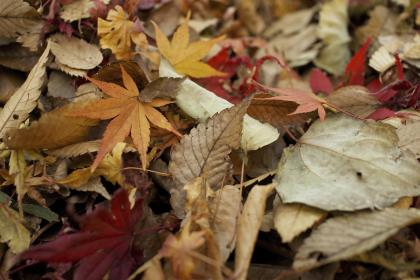 nature, leaves, green, trees, autumn, fall, dried
