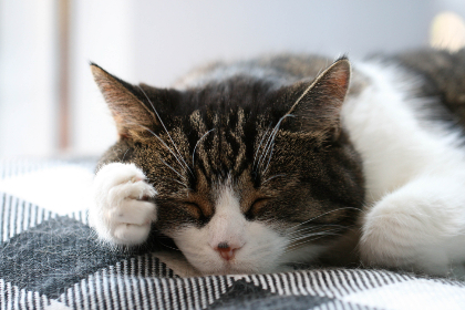 free photo of sleeping   cat
