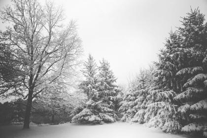 winter, snow, cold, trees, nature, christmas, woods, black and white