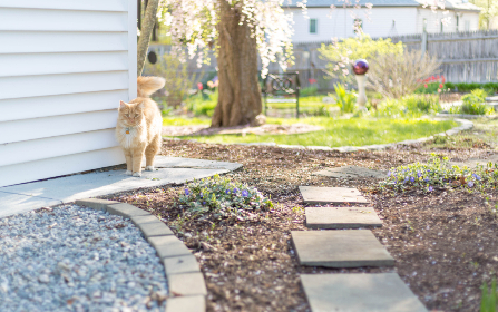 cat,  animal,  outdoors,  feline,  domestic,  house,  yard,  grass,  dirt,  patio,  pet,  kitty,  fur