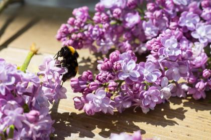 purple, flowers, bumble bee, insect
