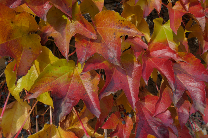 leaf,   leaves,   weather,   autumn,   colorful,   Poland,  Cracow, fall