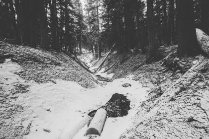 forest, woods, trees, logs, snow, winter, nature, cold, black and white
