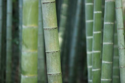 nature, landscape, bamboo, stick, green