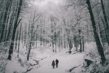 people, couple, travel, outdoor, nature, snow, winter, trees, plant, forest, cold, weather, black and white