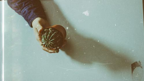 Cactus, plant, thorn, green, nature, pot, table, hand